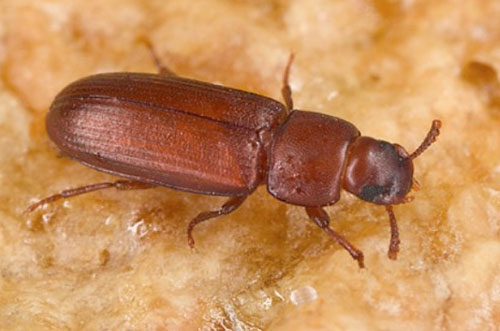 [과학뉴스] 무더위 때문에… 번식력 떨어진 수컷 곤충