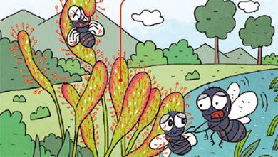 [사냥법] 식충식물, 슉~ 빨아들이고, 미로에 가두고!