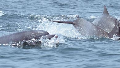 [지구를 위한 과학] 제돌이의 고향, 제주도에서 만난 남방큰돌고래 연구팀