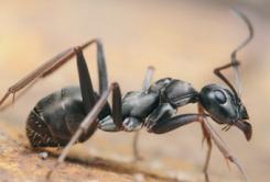 [지구사랑탐사대] 숲속 개미 찾기!