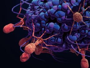 노벨화학상, 생물로 단백질 공장을 만들다!
