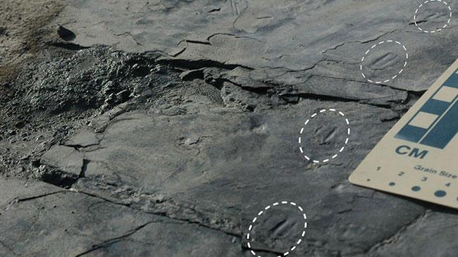 [이달의 PICK] 백악기 한반도에 '참새 공룡' 살았다