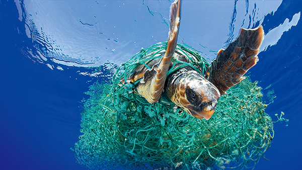 Part 2. 플라스틱 쓰레기의 피해자는 누구?