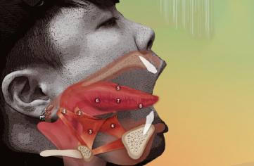 [혀의 진화] 400개 근육의 최종 지휘자