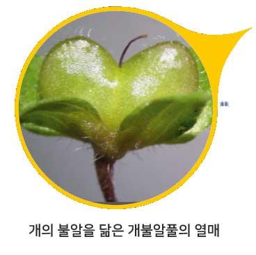 [식물 속 동물 찾기] 큰개불알풀
