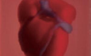 [과학뉴스] 손톱만 한 3D 인공심장