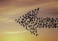 [과학뉴스] 철새의 야간 이동, 단백질 변이 덕분?