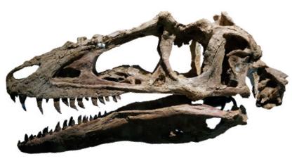 ebay에 경매로 나온 명품 공룡 화석