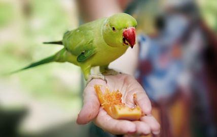 [실전!반려동물] 우리 새가 달라졌어요 : 편식 편