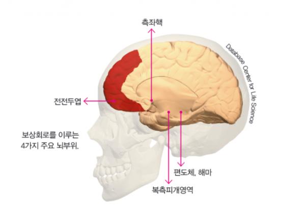 게임이용장애  뇌에선 무슨 일이?