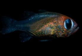고양이 눈을 가진 물고기의 정체는?