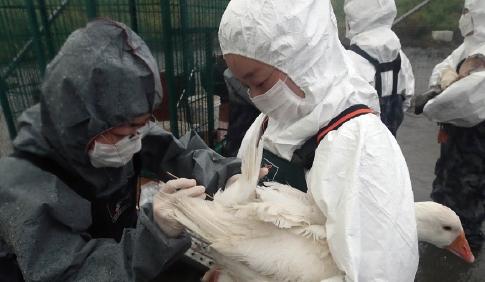 [한페이지 뉴스] 조류인플루엔자가 사람에 감염 안 되는 이유