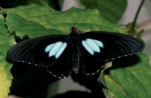 [한페이지 뉴스] 나비에게 배우는 '완벽한 검은색'