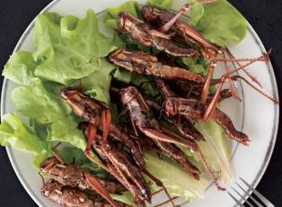 8첩 곤충 반상, 밥상 위로 올라온 곤충