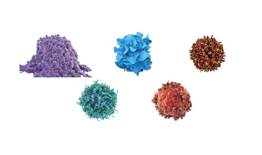 Chapter 04.면역┃ 인체를 지키는 면역세포 5