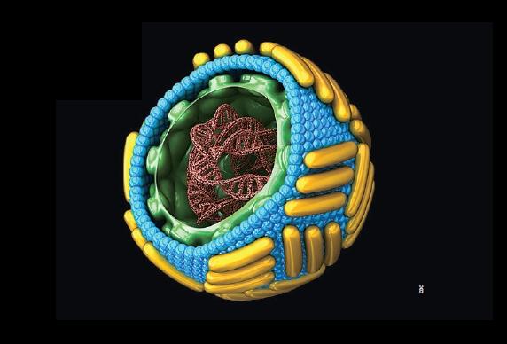 2016년 지카 바이러스 ┃치사율 '제로'에도  공포를 일으킨 바이러스