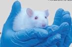 [한페이지 뉴스] 장내미생물이 바이러스 감염도 막는다?