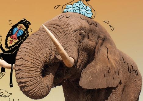 [때문에 과학] 2탄. 큰 귀 코끼리, 짙은 피부 북극곰