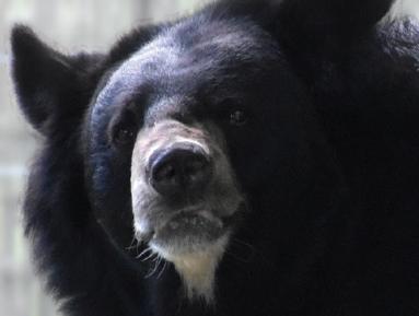 [슬기로운 동물원 생활] 반달가슴곰, 세 마리가 동거하게 된 사연은?