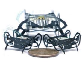 [과학뉴스] 50원 동전만 한 바퀴벌레 로봇 등장!